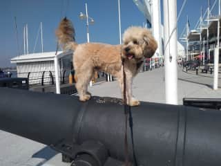 Quinn exploring at The Dock in Portsmouth!
