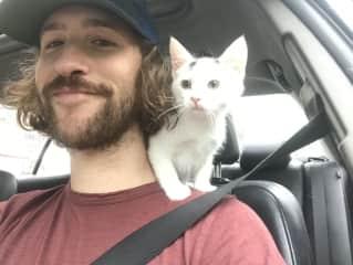 A precious foster kitten