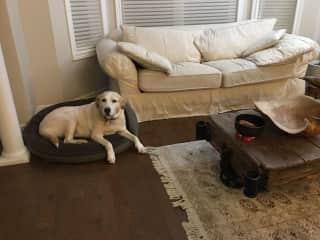 livingroom, Zoe's bed by the front door.