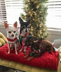 Waiting for Santa (Fiona, Jezzi, and Bacon).