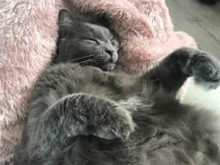 Winston napping :-)