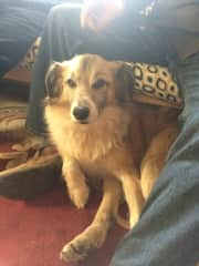 Felipo is an Ecuadorian mutt who only understands English. He loves for you to sit with him. Felipo also loves to run and play.