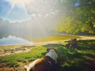 I was with Woody and Pinky for 4 months, and we loved going to the lake!