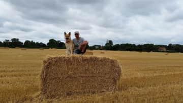 Beautiful field with Barnaby