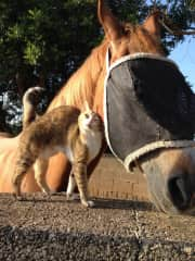 Basil and Noddy