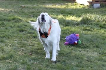 Mackenzie dressed for Halloween