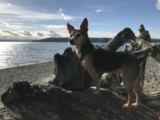 Bella enjoying a local beach