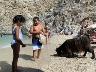 Kids had the best time feeding mountain goat in Greece , and enjoy the time at the beach