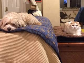 This is Lucie and Kitty.  Lucie passed away in Jan 2019 at the age of 15 1/2.