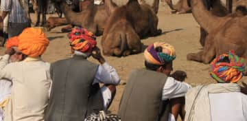 At the camel fair in India,
