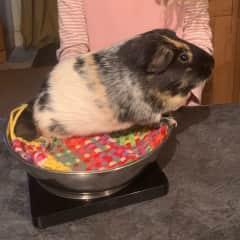 Dear Sir weighing in