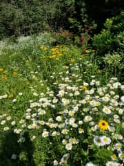 Our wild gardens