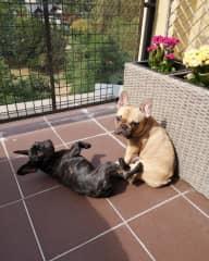 Freya and Arya in the terrace