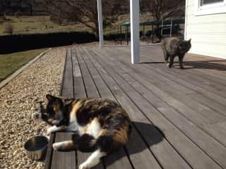 Tigerlily and Cusco - farm cats - originally strays whom I befriended