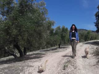 Walking Mylor and Hattie through the olive groves, Spain