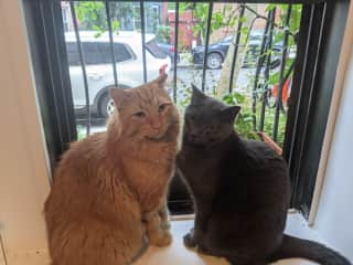 Edgar and Silver love looking at the window