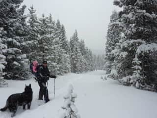 Hiking in Colorado with kids and dogs.
