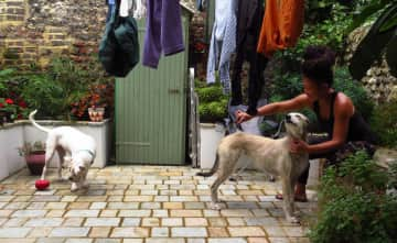 Mel brushes Mouse while Pearl plays in our hosts' Brighton, UK, backyard.