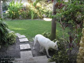 Jeffrey in his yard - in our Miami home