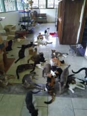 Cats at the rescue centre where I volunteered
