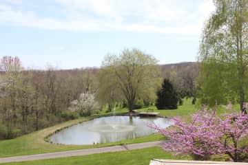 pond in Springtime