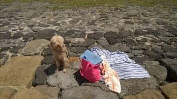 Dog Misha, in Angra da herosimo 2016.  Dog /boat sitting in Azores 2016