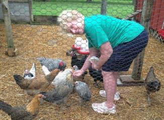 Feeding the friendly chickens!
