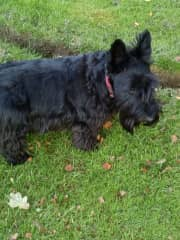 Tali short for Talisker a lovely gentle dog in Crawley Down