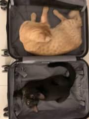 Take me with you!