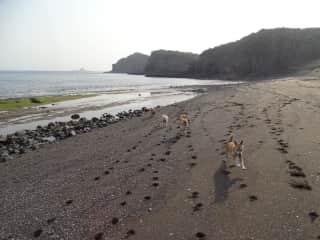 Django at the beach with friends, Lola, Dora and Sally.