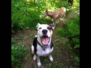They love to hike!