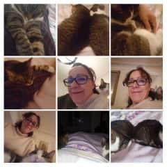 Paris kitties