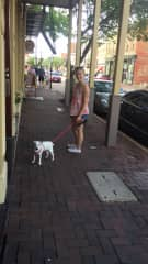 Cookie enjoying a walk through downtown.