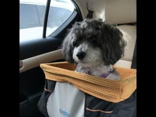 Adventure bound with my best buddy!