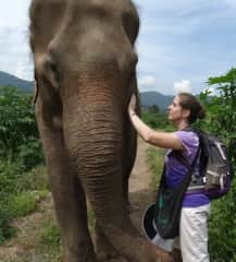 Hiking with elephants in Thailand