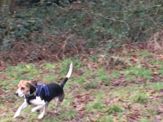 Penny loves to run free