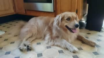 Brady on the kitchen floor.