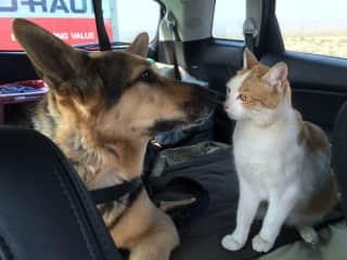 Loki and Jackson getting ready to take a trip.