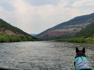 Floating Colorado river with a SUP pup