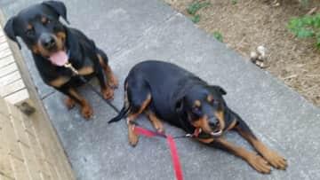 Walking Boss and Tess