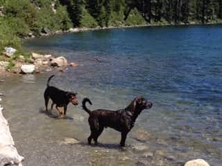 My rescued doggies enjoying the lake