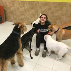 Me with the dogs at the doggy daycare/hotel I managed.