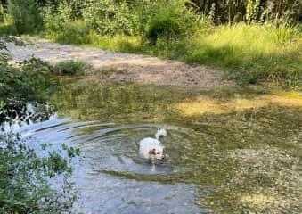 Peanut loves a quick dip!