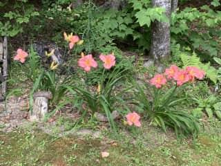 Gardening in Maine