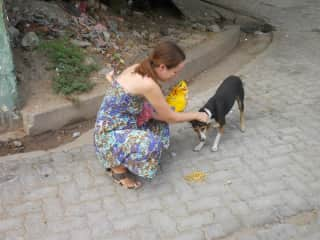 Daily feeding of the street dogs in Pondicherry, India