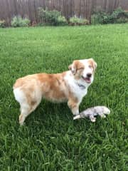 Otis in the backyard