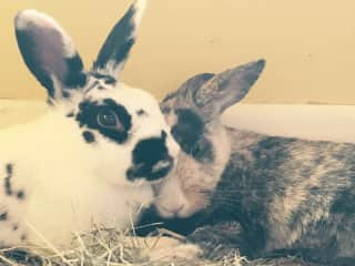 Our rabbits!