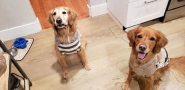 Scottie (left) and Max (right) are very patient and unless it's hot out, they don't mind being dressed up or wearing sweaters.