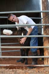 Michael and calf