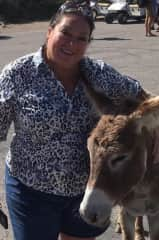 Donkey on a Caribbean island.